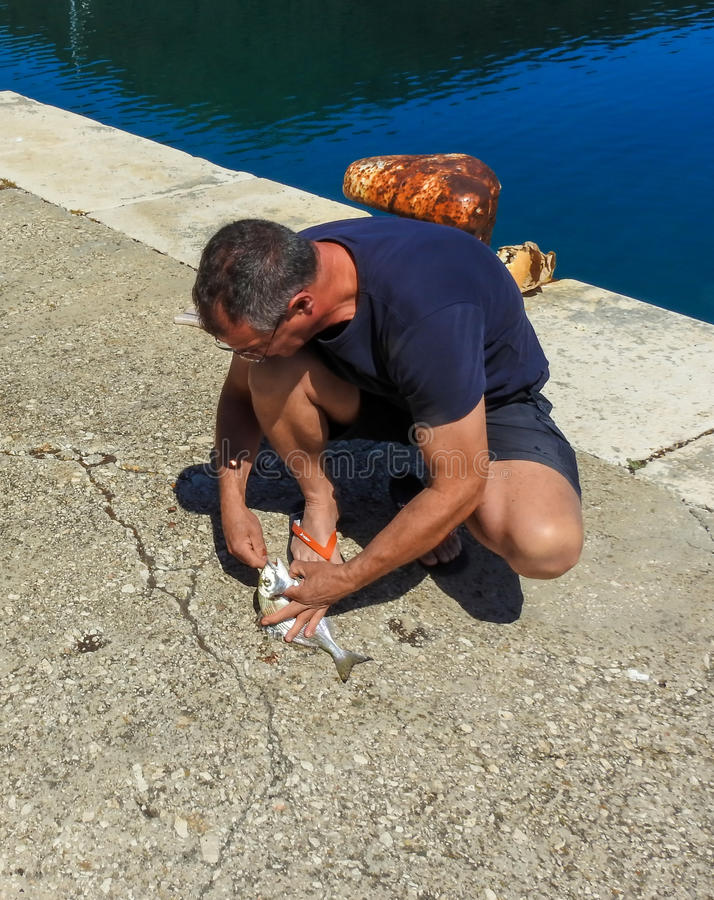 Just caught fish 2. A man takes a hook from a fish`s mouth. Fish is Gilt head sea bream. Photo taken on island Lastovo in Croatia stock image