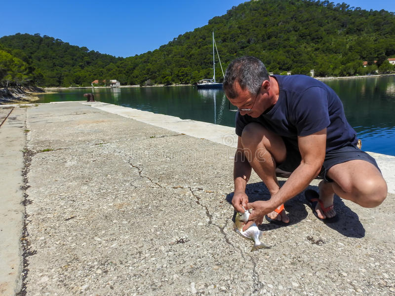 Just caught fish 3. A man takes a hook from a fish`s mouth. Fish is Gilt head sea bream. Photo taken on island Lastovo in Croatia stock photos