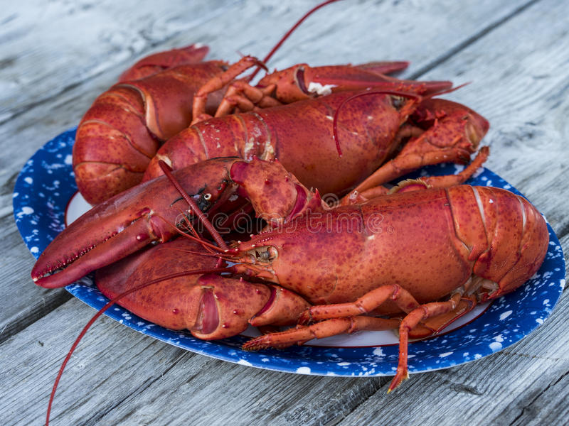 Just cooked Maine Lobster. A plate of just cooked Maine Lobsters fresh off the boat royalty free stock photo