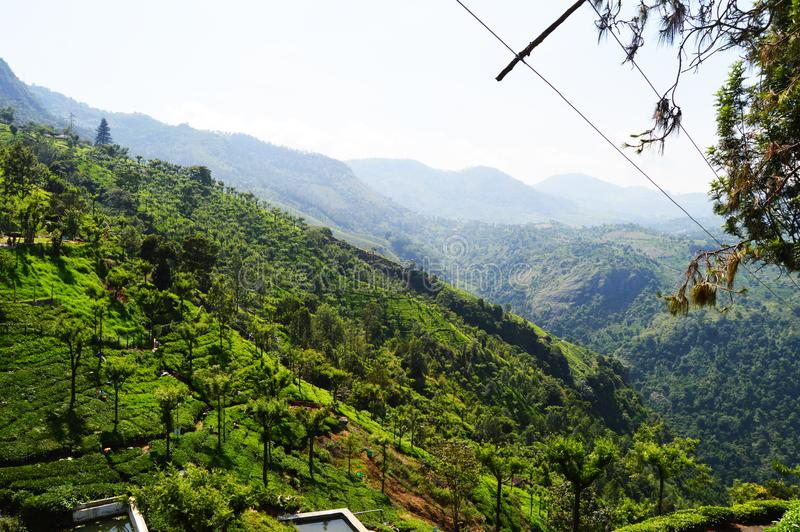 Just after fog the valley of kerala in the moring royalty free stock photography