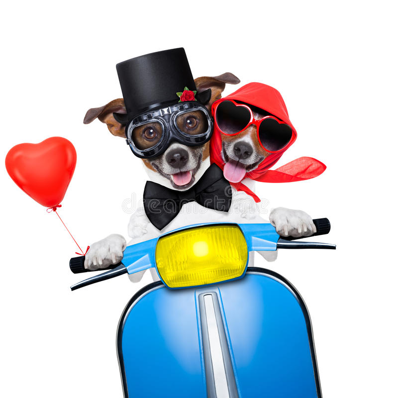 Just Married Dogs Stock Photo Image Of Drive, Holiday -5091