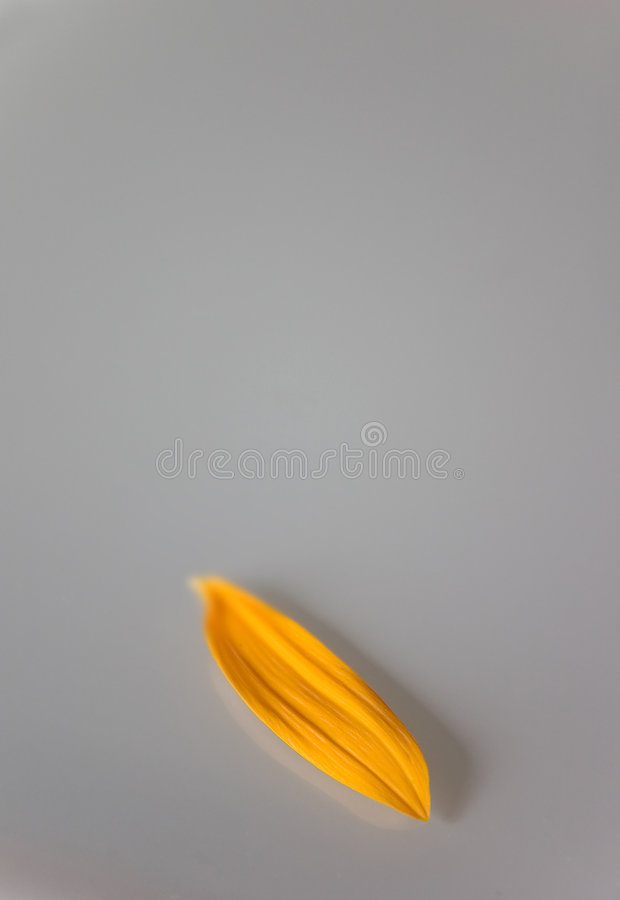 Just one petal left royalty free stock photo
