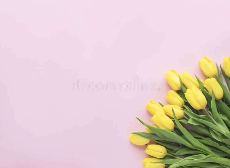 just rained Η κίτρινη τουλίπα ανθίζει την ανθοδέσμη που απομονώνεται στο ρόδινο υπόβαθρο Επίπεδος βάλτε, τοπ άποψη Ελάχιστη flora στοκ εικόνα