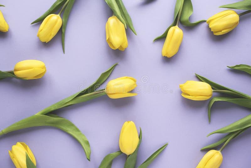 just rained Κίτρινα λουλούδια τουλιπών στο πορφυρό υπόβαθρο Επίπεδος βάλτε, τοπ άποψη Ελάχιστη floral χλεύη επάνω στην έννοια στοκ εικόνες