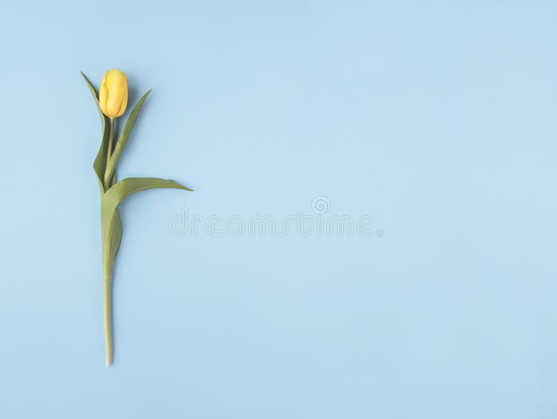 just rained Κίτρινο λουλούδι στο μπλε υπόβαθρο κρητιδογραφιών Επίπεδος βάλτε, τοπ άποψη Ελάχιστη έννοια προσθέστε το κείμενό σας στοκ φωτογραφία με δικαίωμα ελεύθερης χρήσης