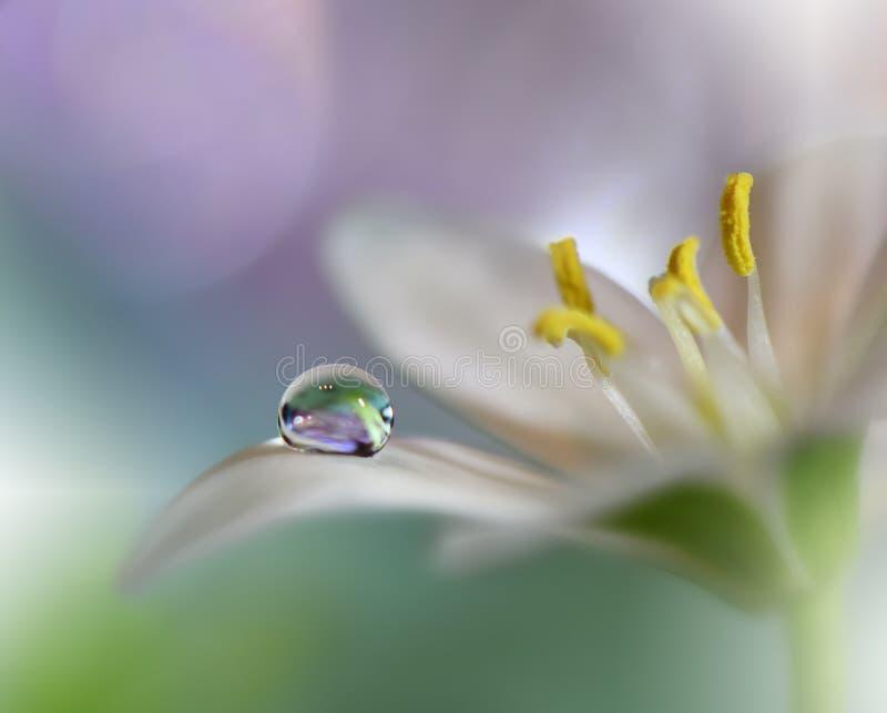 Красивая зеленая предпосылка природы Абстрактные художественные обои Фотография макроса искусства just rained Изумляя флористичес стоковые изображения rf