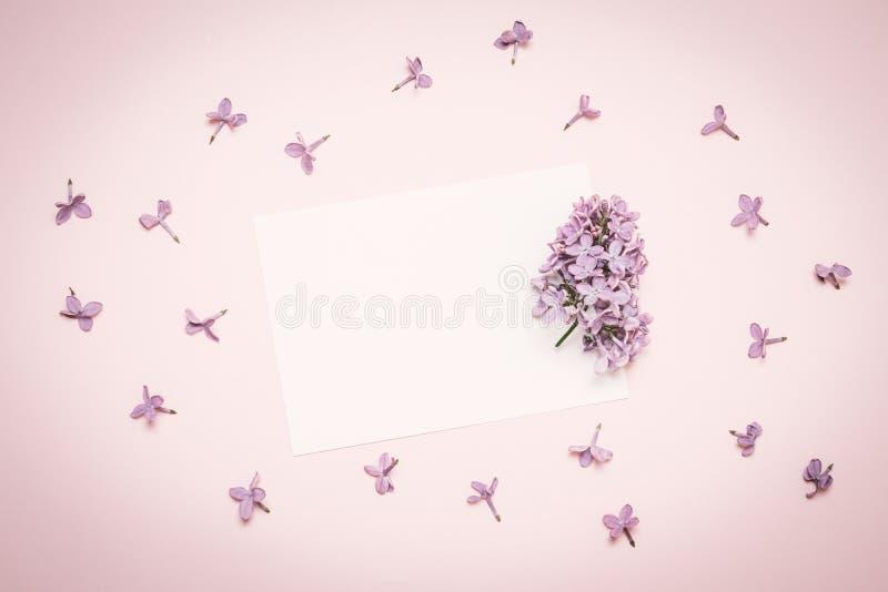 just rained Цветки сирени на белой предпосылке r стоковые изображения rf