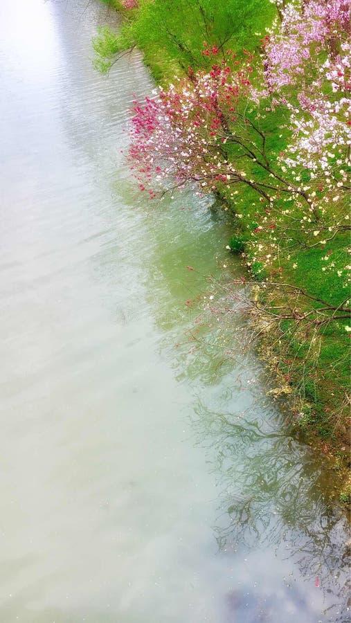 just rained стоковая фотография rf