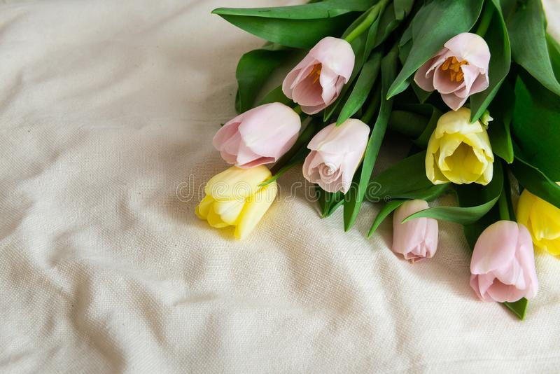 just rained Bukett av rosa gula tulpan p? beige tygbakgrund Mors dag, valentindag och lycklig f?delsedag royaltyfri fotografi