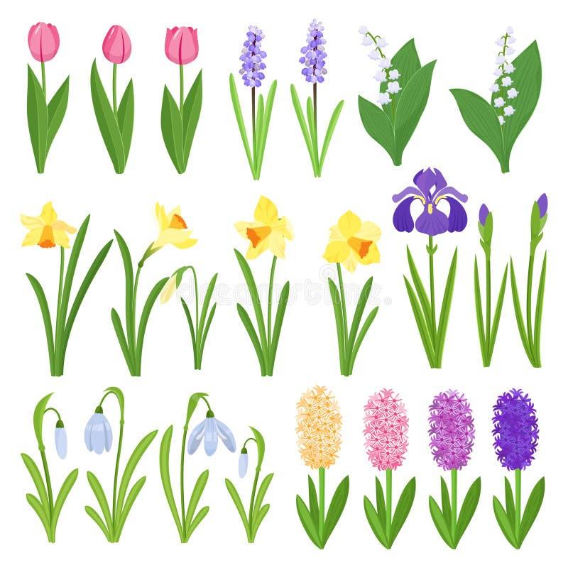 just rained Iriers, liljor av dalen, tulpan, narcissuses, krokusar och andra primulor Trädgårds- designsymboler stock illustrationer
