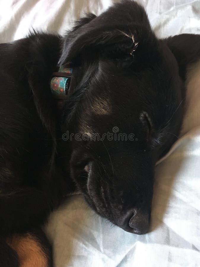 Happy puppy stock images