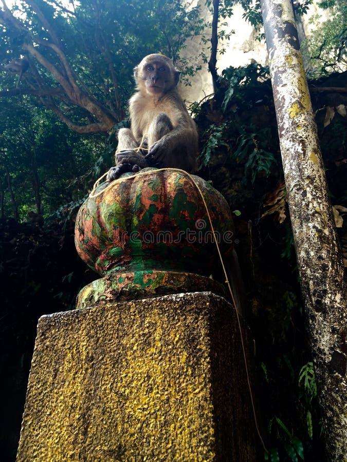 Juste affaires de singe ! images stock