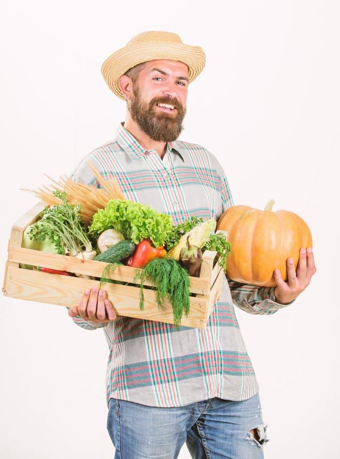 Juste du jardin L'agriculteur portent des l?gumes de bo?te ou de r?colte de panier Excellents l?gumes de qualit? Concept d'?picer photographie stock