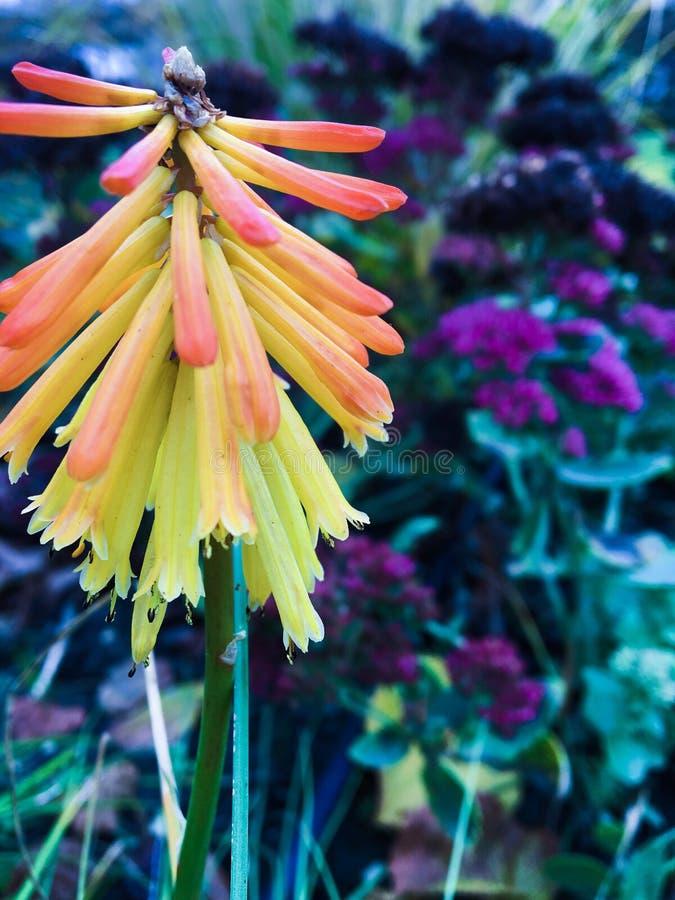 Juste fleur colorée image stock