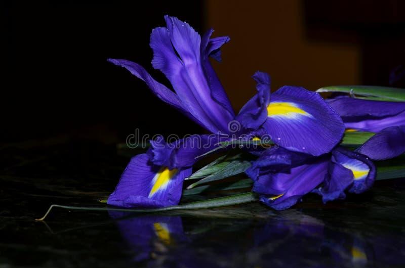 Juste plu en fonction iris photos stock