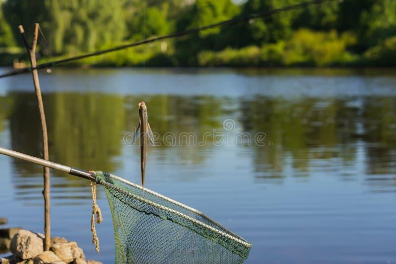 Juste sabrefish attrapés de poissons accrochant sur un crochet sur la pêche avec le filet de pêche à l'arrière-plan du paysage na photographie stock