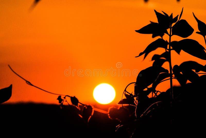 Juste un coucher du soleil image stock