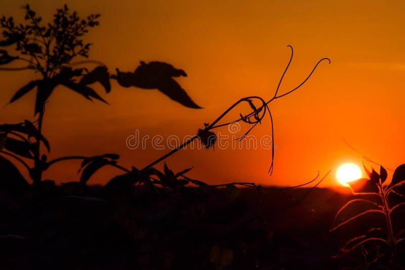 Juste un coucher du soleil image libre de droits