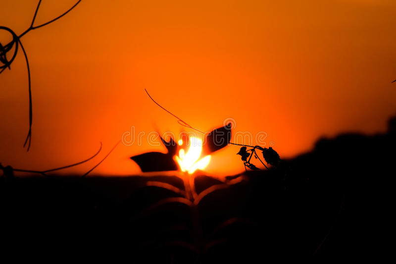 Juste un coucher du soleil photos libres de droits