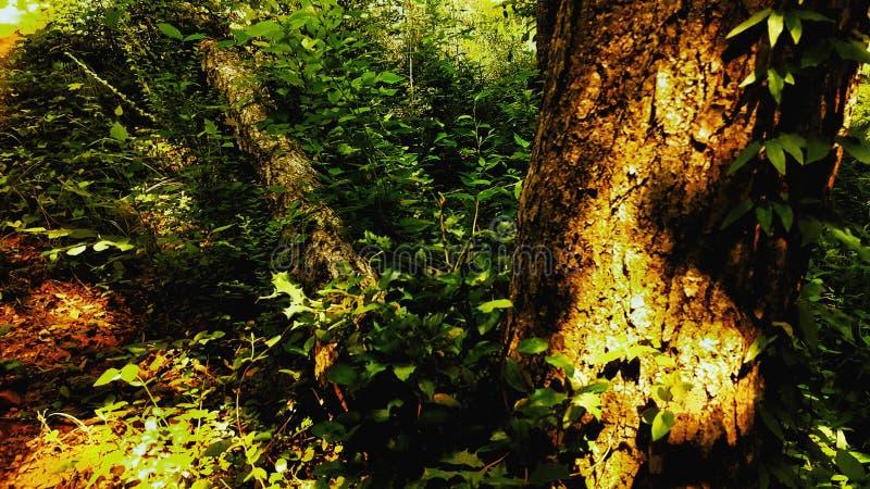 Juste un rondin et un arbre photo libre de droits