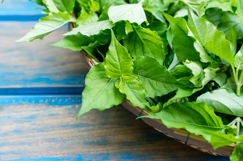 Justicia Gangetica Vegetable royalty free stock images