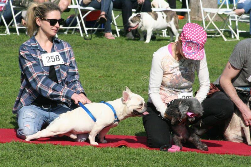 Justin Rudd Haute Dog Contest photographie stock libre de droits