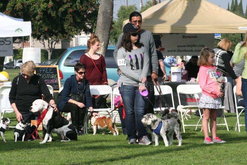 Justin Rudd Haute Dog Contest stock afbeelding
