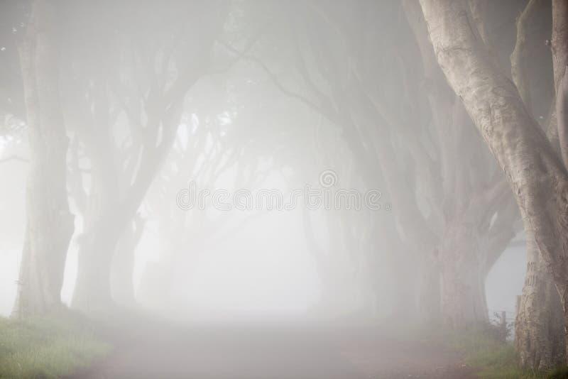 Jutrzenkowa mgła wśród drzew Ciemni żywopłoty, Północny Irlandia fotografia royalty free
