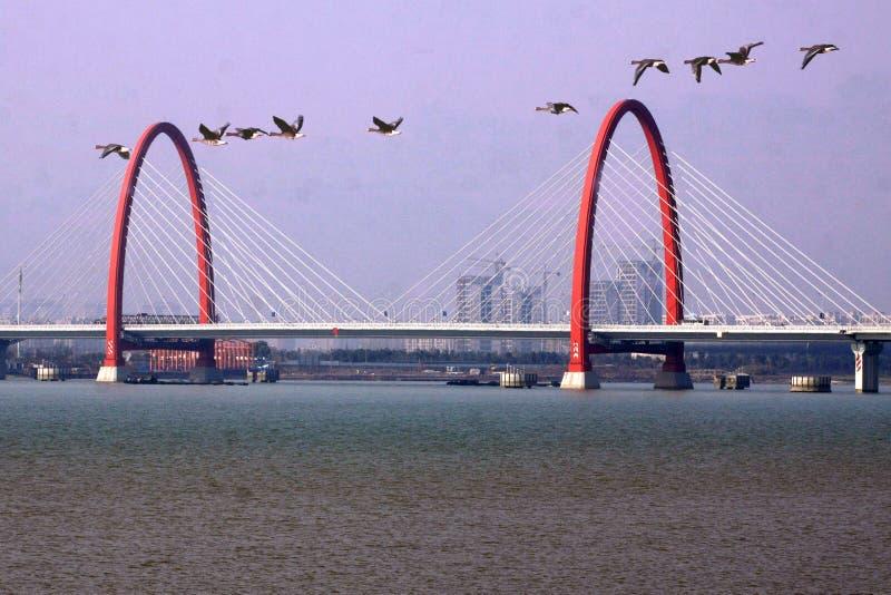 Jutrzenkowi żurawie latają qiantang rzekę obraz stock