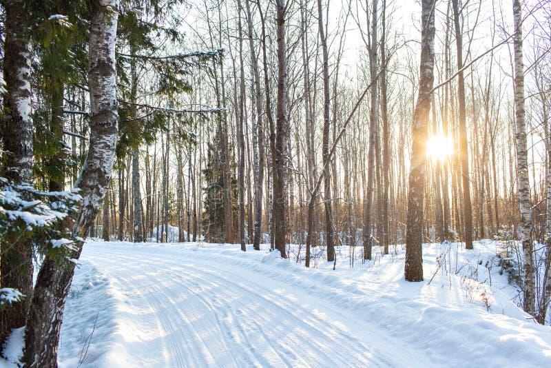 Jutrzenkowy mroźny ranek Zima krajobraz mroźni drzewa, biały śnieg i niebieskie niebo, Spokojna zimy natura w świetle słonecznym  fotografia stock