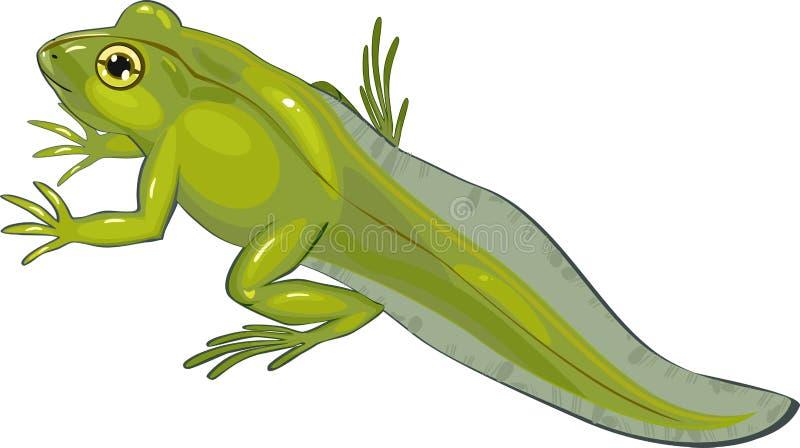 Juvenile frog. On white background royalty free illustration