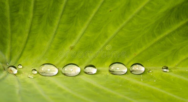 Juwelen der Natur lizenzfreie stockbilder
