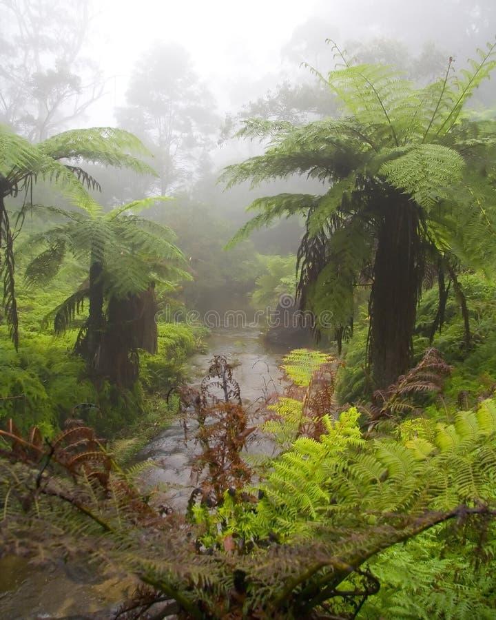 Jyngle in Mist