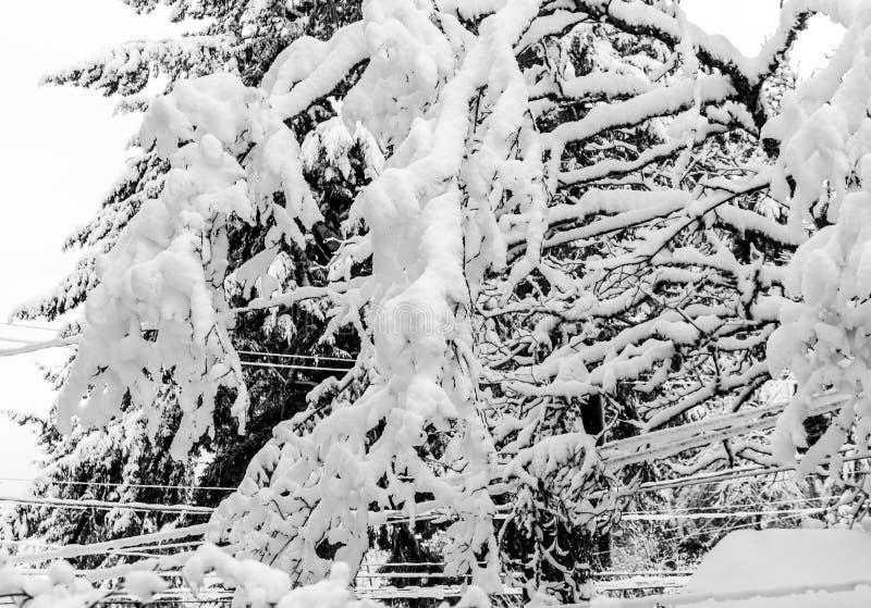 Kępy Śnieżny abstrakt 3 obraz royalty free