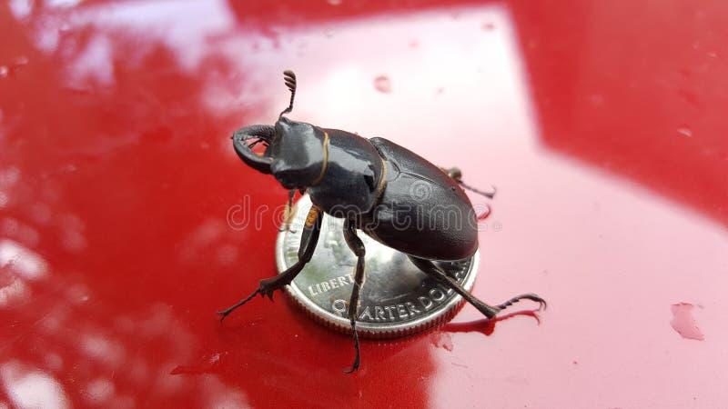 käfer stockfotografie