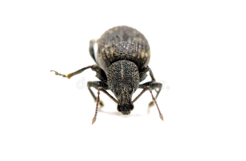 Käfer stockfotos