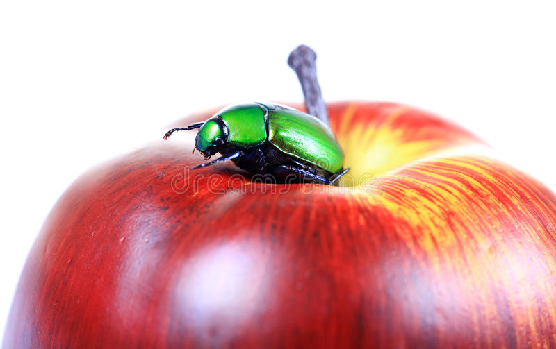 Käfer auf Apfel lizenzfreie stockbilder