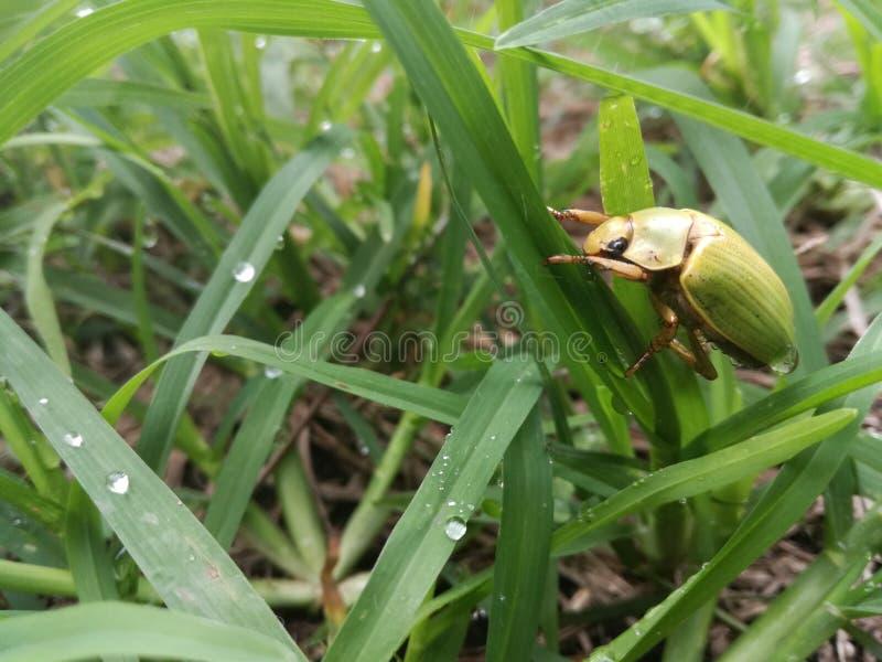 Käfer auf dem Gras - Seite stockfoto