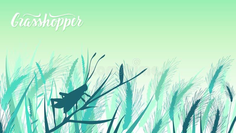 Käferheuschrecke sitzt auf einem Grashalm in der Buschillustration Leben von Insekten in der wilden Illustration Schönheitsmakro lizenzfreies stockfoto