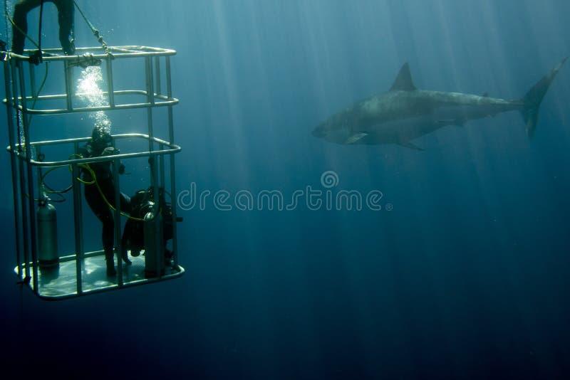 Käfigtauchen mit dem weißen Hai bereit anzugreifen lizenzfreie stockbilder