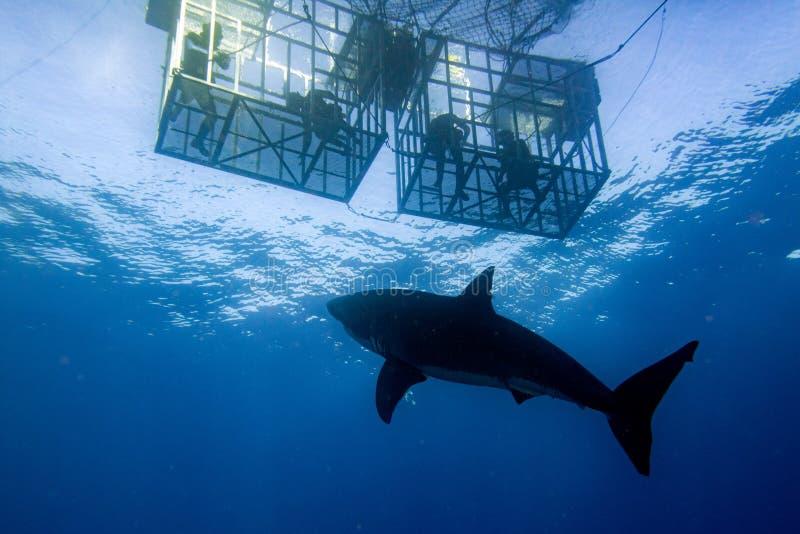 Käfigtauchen mit dem Weißen Hai bereit anzugreifen lizenzfreies stockfoto