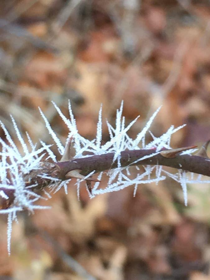 Kälte frühen Morgens Frosts stockfotografie