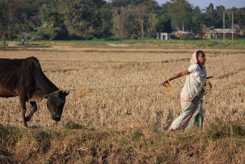 kämpa Oidentifierad kvinna som går tillbaka från fältet royaltyfri fotografi