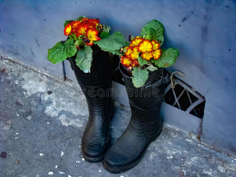 Kängor med blommor fotografering för bildbyråer