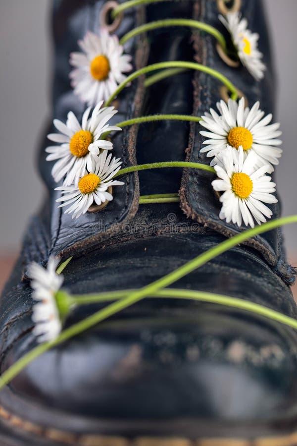 Kängor med Daisy Flowers royaltyfri bild