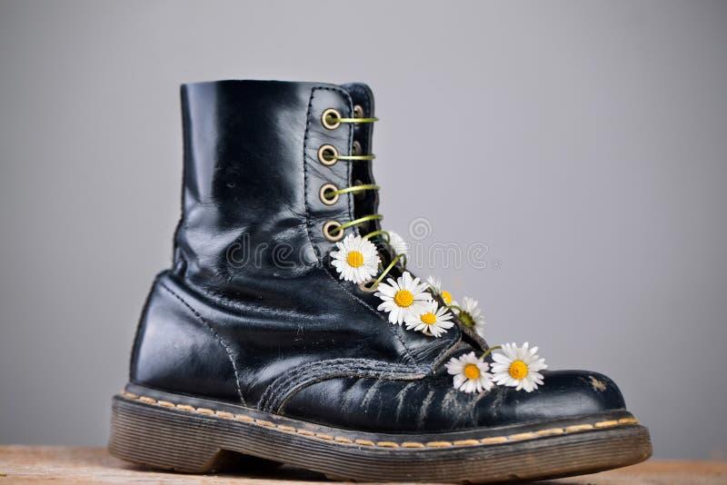 Kängor med Daisy Flowers fotografering för bildbyråer
