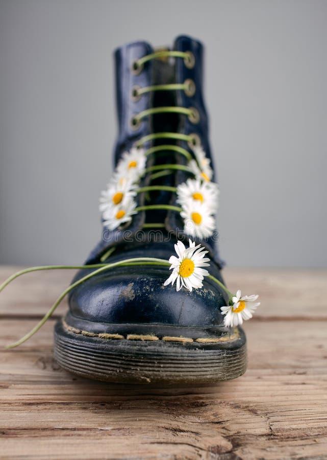 Kängor med Daisy Flowers arkivbilder
