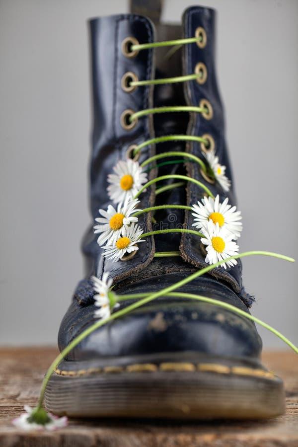 Kängor med Daisy Flowers royaltyfri fotografi