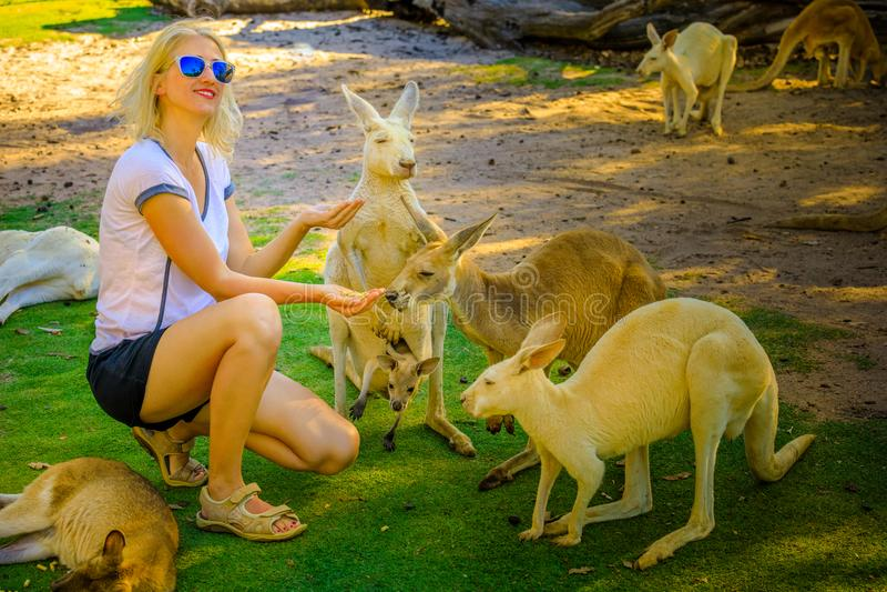 Känguru mit joey lizenzfreies stockbild