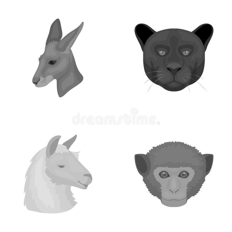 Kängurur lama, apa, panter, fastställda samlingssymboler för realistiska djur i monokromt materiel för stilvektorsymbol stock illustrationer
